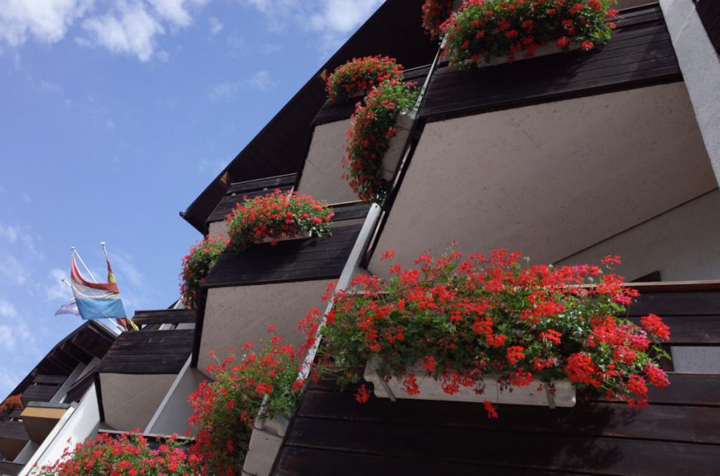 朝、部屋のバルコニーから。赤い花がキレイ!でもバルコニーは隣の部屋とつながってますが・・・(^_^;)